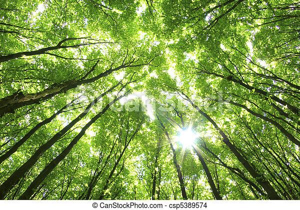 achtergrond, groene bomen - csp5389574