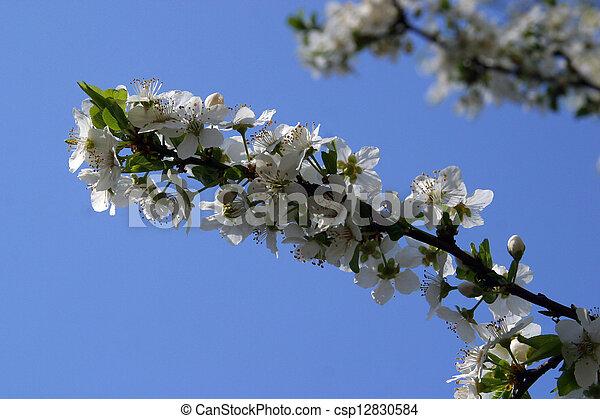 afsluiten, bloemen, op, fruit - csp12830584
