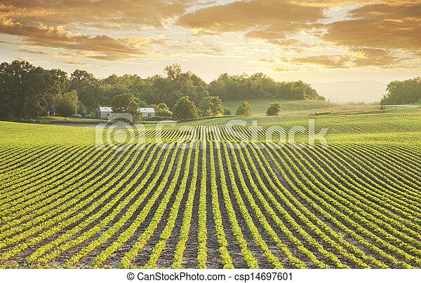akker, sundown, soybean - csp14697601