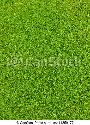 akker, voetbal, groen gras - csp14859177