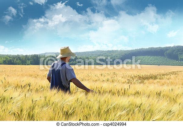akker, wandelende, tarwe, door, farmer - csp4024994