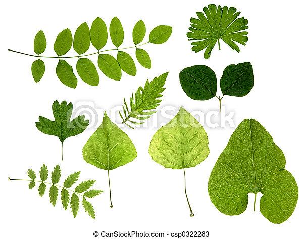 bladeren, groene, vrijstaand - csp0322283