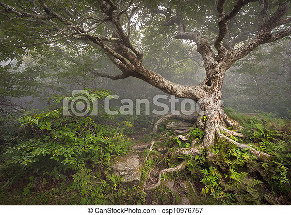 blauwe bergen, rotsachtig, kam, spooky, fairytale, nc, boompje, griezelig, fantasie, asheville, mist, bos, appalachian, noorden, tuinen, landscape, carolina - csp10976757