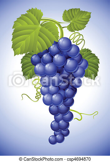 blauwe groep, bladeren, druif, groene - csp4694870
