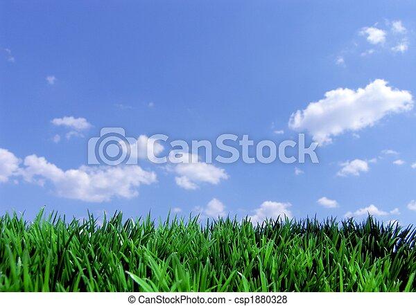 blauwe hemel, gras, groene - csp1880328