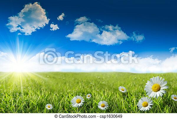 blauwe , wild gras, hemel, madeliefjes - csp1630649