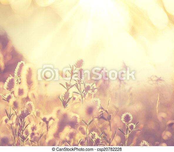 bloemen, weide - csp20782228
