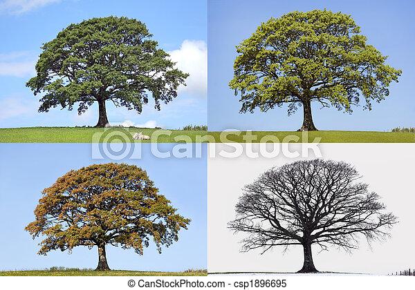 boompje, jaargetijden, vier, eik - csp1896695