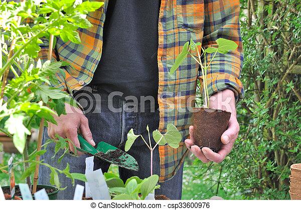 boon, plantatie, seedlings - csp33600976