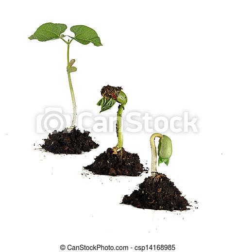 boon, seedlings - csp14168985