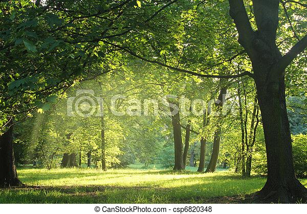 bos, zomer, bomen - csp6820348