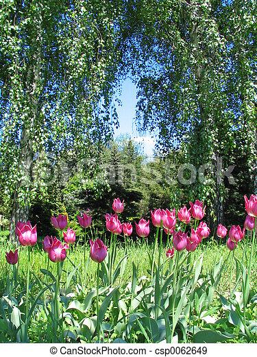 botanische tuin - csp0062649