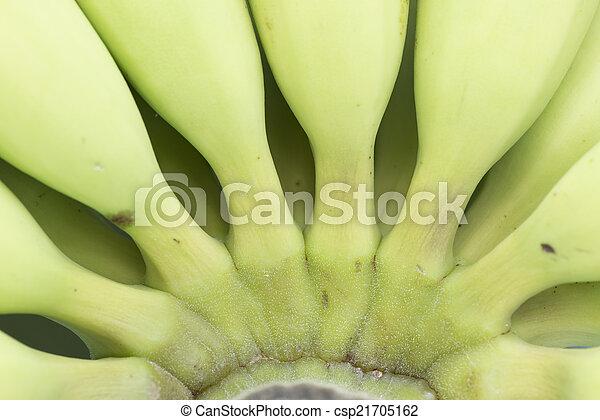 boven., afsluiten, groene, jonge, banaan - csp21705162