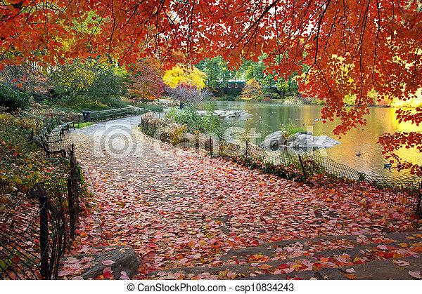 centraal, bladeren, park, york, herfst, nieuw - csp10834243