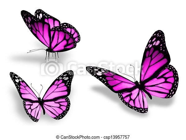 drie, vrijstaand, achtergrond, viooltje, witte , vlinder - csp13957757