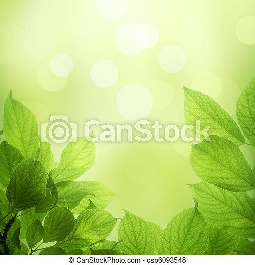 fris, bladeren, groene - csp6093548