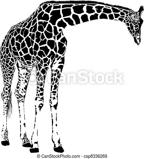 giraffe, vector - csp8336269