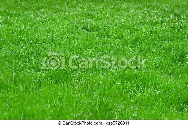 gras, achtergrond - csp5726911