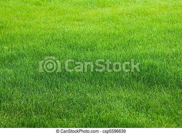 gras, groene achtergrond - csp5596639