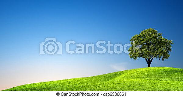 groen boom, ondergaande zon  - csp6386661