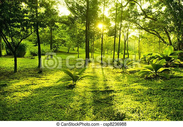 groen park, bomen - csp8236988