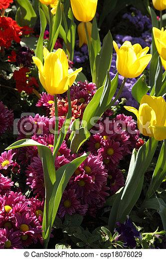 grown, exquisite., op, parken, tulpen - csp18076029