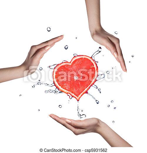 hart, water, grapefruit, gespetter, menselijke handen, witte  - csp5931562