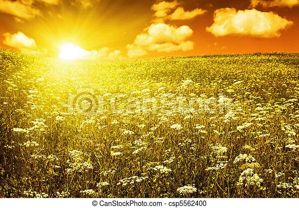 hemelgebied, groene, bloeiende bloemen, rood - csp5562400