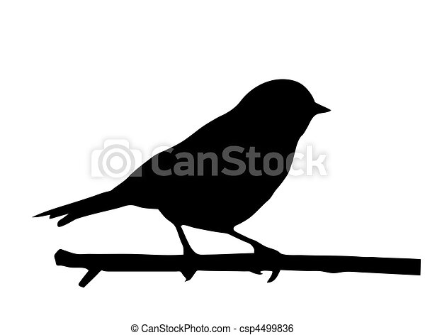 kleine, vector, silhouette, vogel, tak - csp4499836