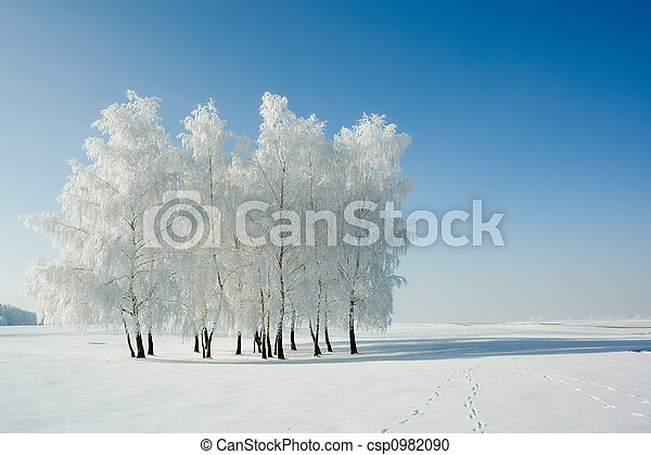 landscape, winter bomen - csp0982090