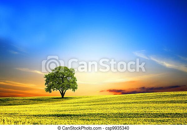 lente, ondergaande zon , landscape - csp9935340