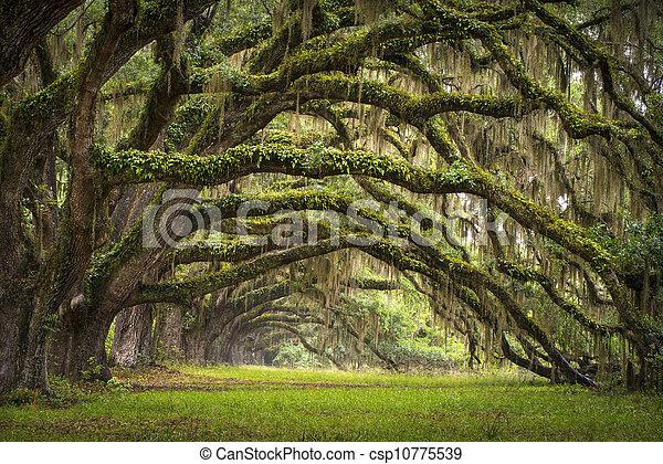 lowcountry, aas, landscape, eik, bomen, plantatie, leven, bos, sc, charleston, eiken, laan, spoelbak, zuidelijke carolina - csp10775539