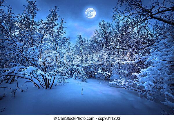 maanlicht, hout, winter, nacht - csp9311203