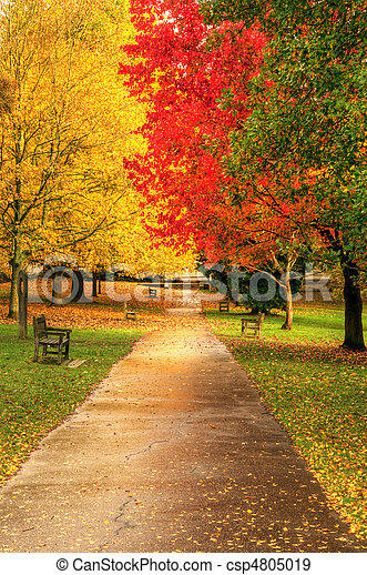 mooi, herfst, herfst, scène, bos - csp4805019