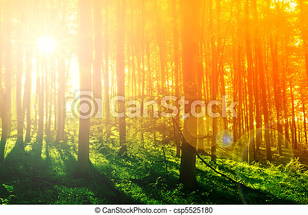 mystiek, kleurrijke, zon, morgen, bos, straal - csp5525180