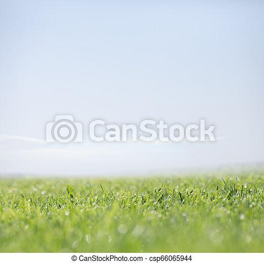 natuur, duidelijke lucht, groene achtergrond, gras - csp66065944