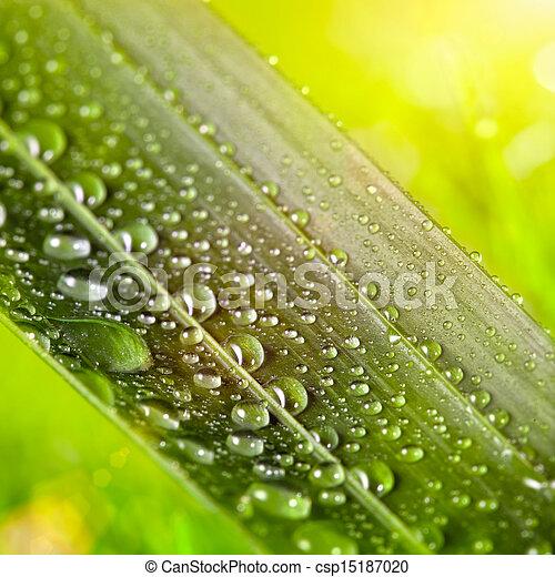 natuurlijke , zonnig, water, groene achtergrond, blad, druppels - csp15187020