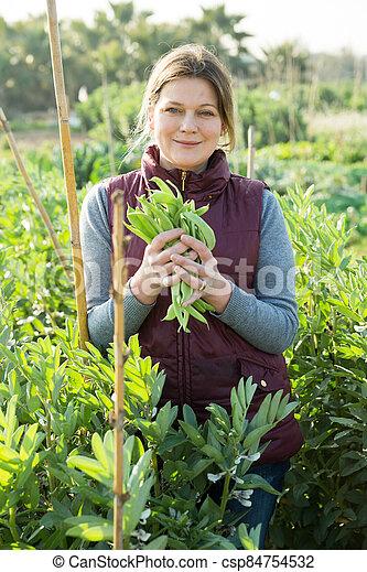 oogst, vrouw, bonen, breed - csp84754532