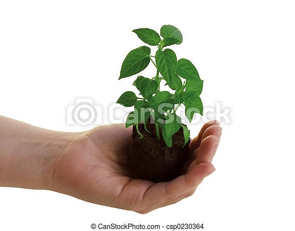 plant, hand - csp0230364