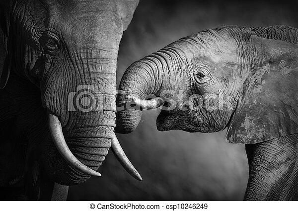 processing), (artistic, genegenheid, elefant - csp10246249