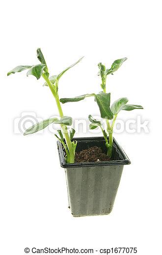seedlings - csp1677075