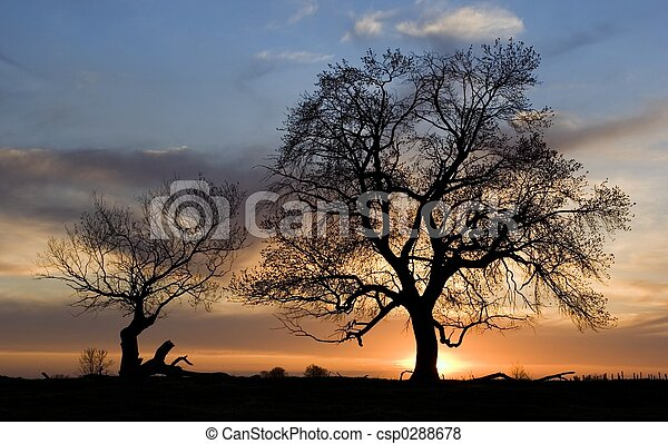 silhouette, bomen - csp0288678