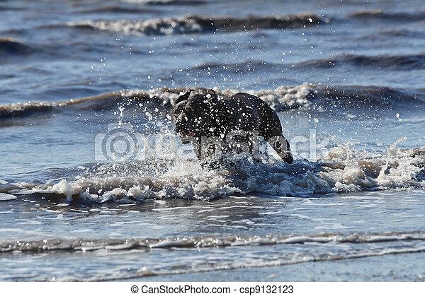 water, dog - csp9132123