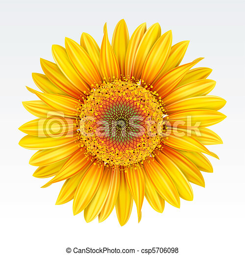 zonnebloem - csp5706098