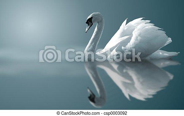 zwaan, weerspiegelingen - csp0003092
